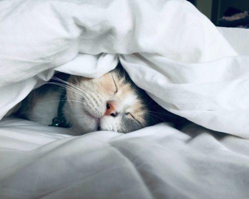 失眠不用藥,三步驟讓你擁有好睡眠