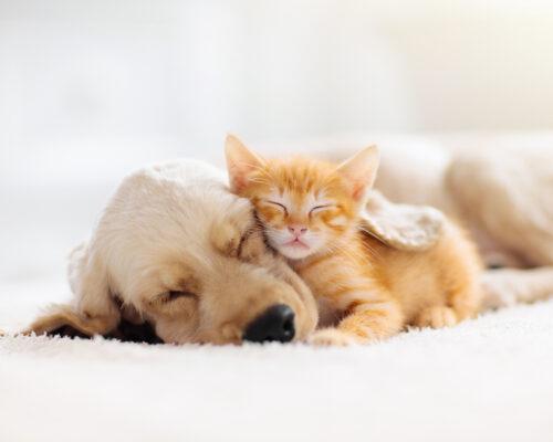 聊聊寵物療癒